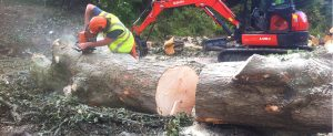 Tree Surgeons, Job Vacancy, Experienced