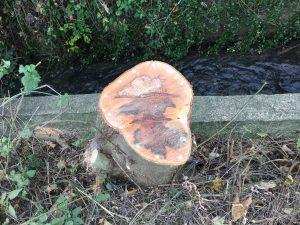 Ecoplugs in tree stump