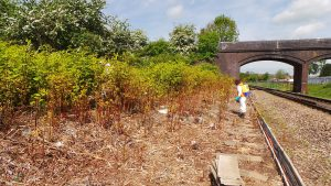 Japanese Knotweed Spray works on the railway at Bristol