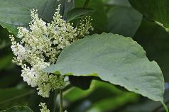 shutterstock_JK leaf